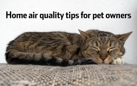 Air Quality Tips for Cat Owners